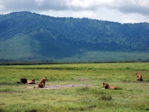 Tansania - Safari - Ngorongoro Krater