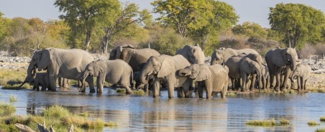 Elefanten im Etosha Nationalpark - Namibia Reisebericht