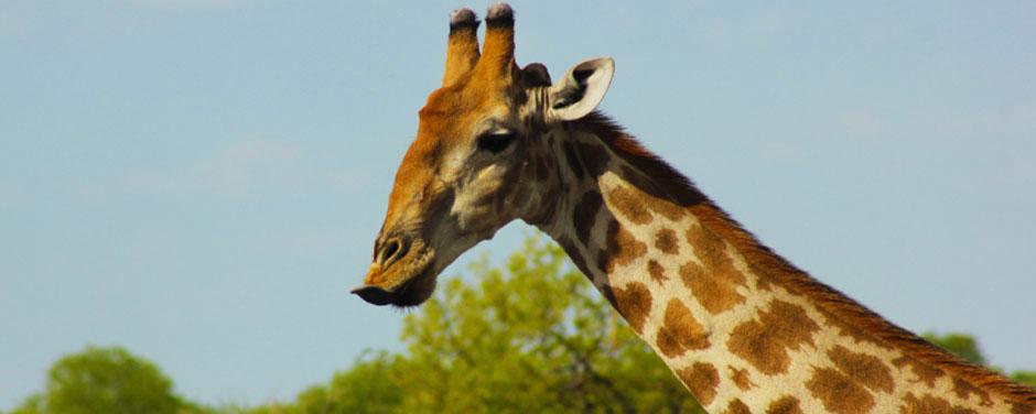 Safari - Namibia - Reisen