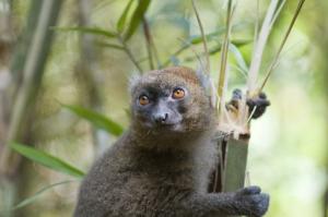 Madagaskar - Individualreise - Dschungel