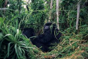 Ruanda - Gruppenreisen