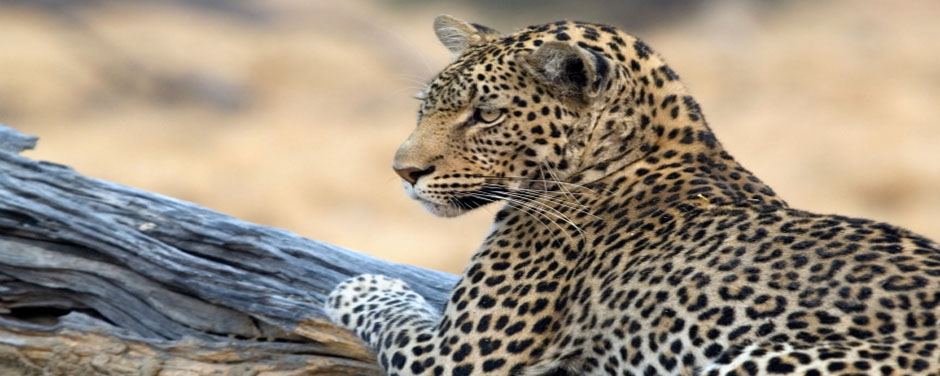 Safari - Botswana - Reisen