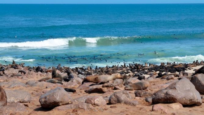 Namibia - Reisen - Robbenkolonie