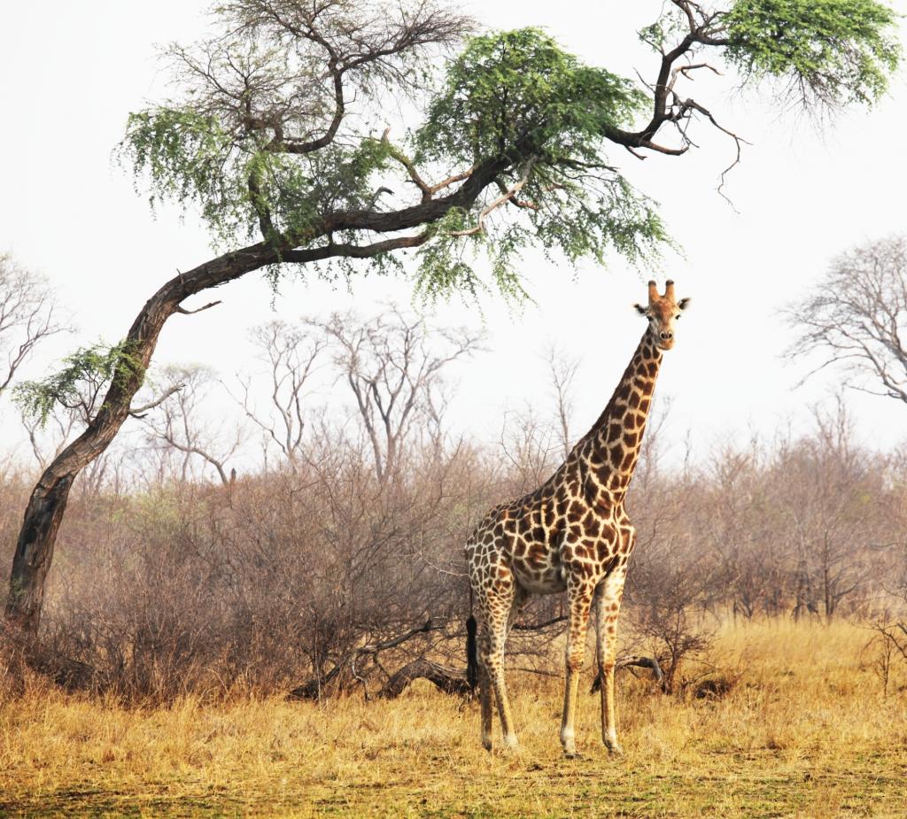 Naturschutzgebiete Namibia