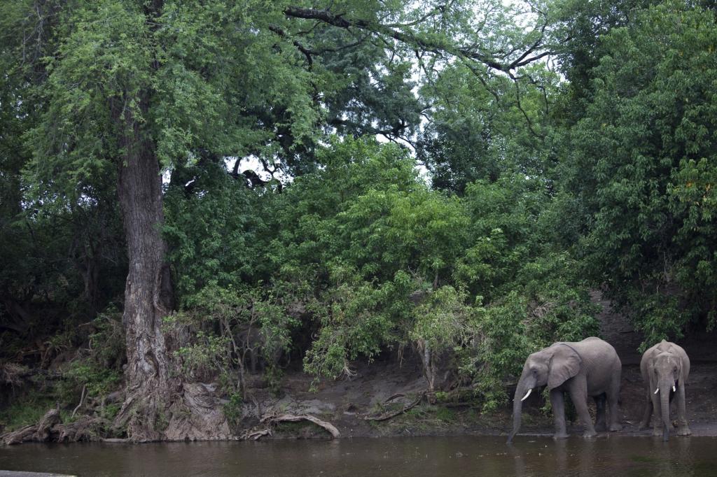 Liberia - Reisen - Waldelefanten