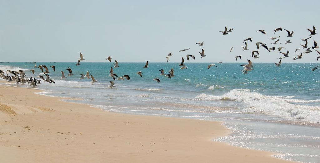 Mauretanien - Reisen - Vögel