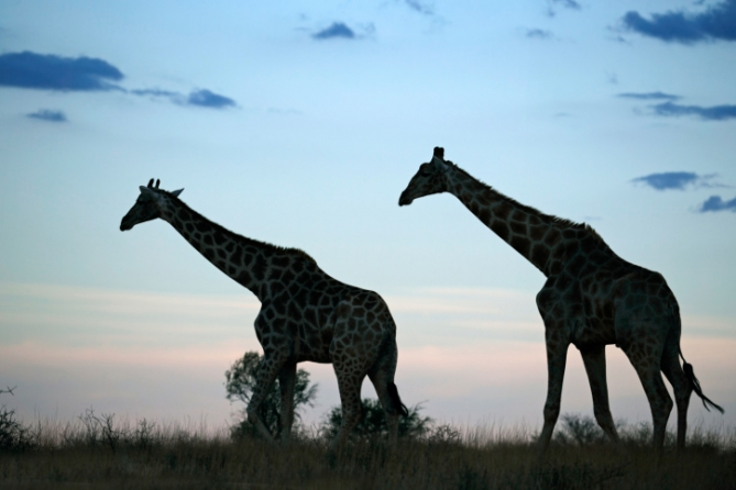 Südafrika - Reisen - Einreise
