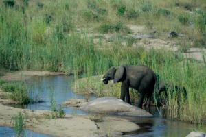 Safari - Südafrika - Reisen