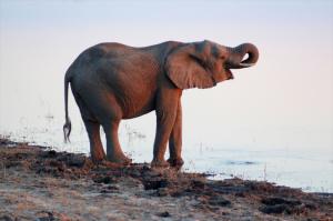 safari - Tansania - Reisen