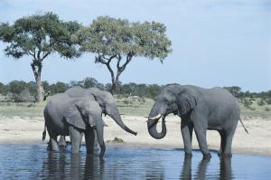 Safari - Botswana - Reisen - Chobe River