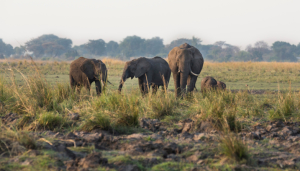 Namibia - Individualreisen - Chobe Nationalpark