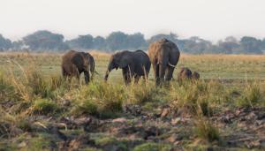 Namibia - Individualreisen - Chobe Nationalpark