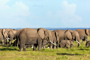 Kenia - Safari - Amboseli Nationalpark