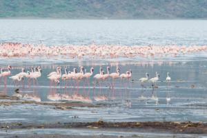 Kenia - Reisen - Lake Bogoria