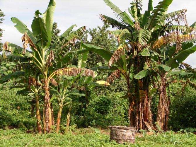 Benin - Reisen - Landschaft