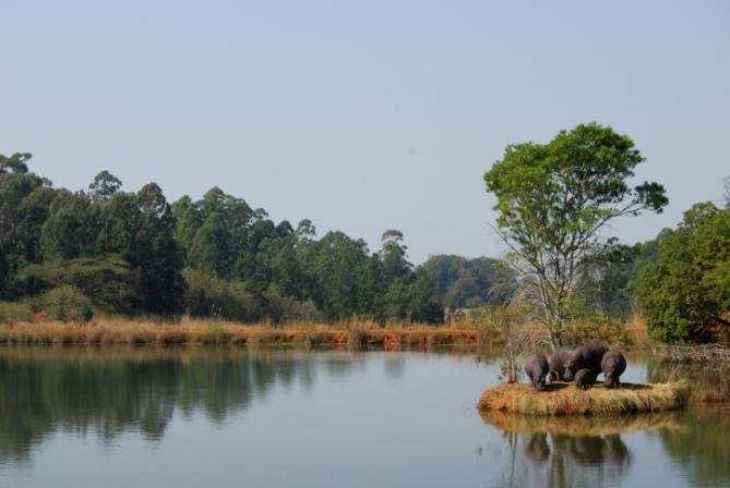 Swasiland - Reisen - Flusspferde