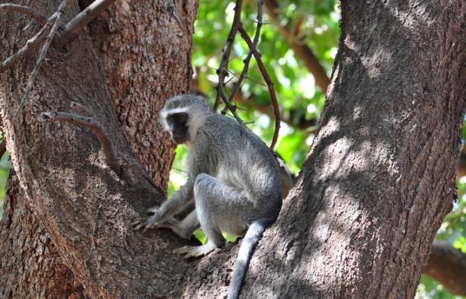 Südafrika - Reisen - Affen