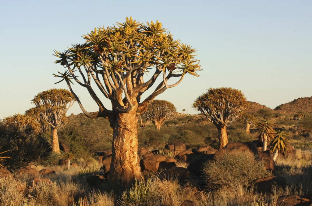 Keetmanshoop -Namibia