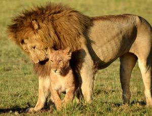 Tansania - Safari - Serengeti