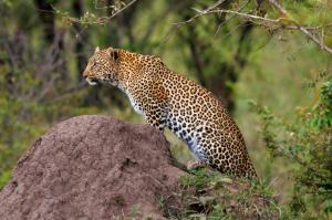 Kenia - Gruppenreise - Masai Mara