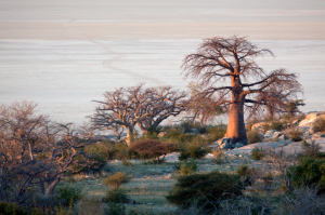 Botswana - Gruppenreisen - Makgadikgadi-Salzpfannen