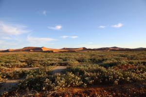 Namibia - Gruppenreisen - Namib Wüste