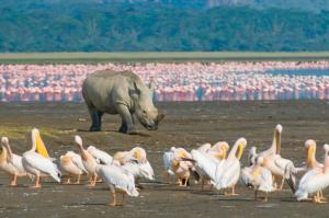 Kenia - Reisen - Flamingos