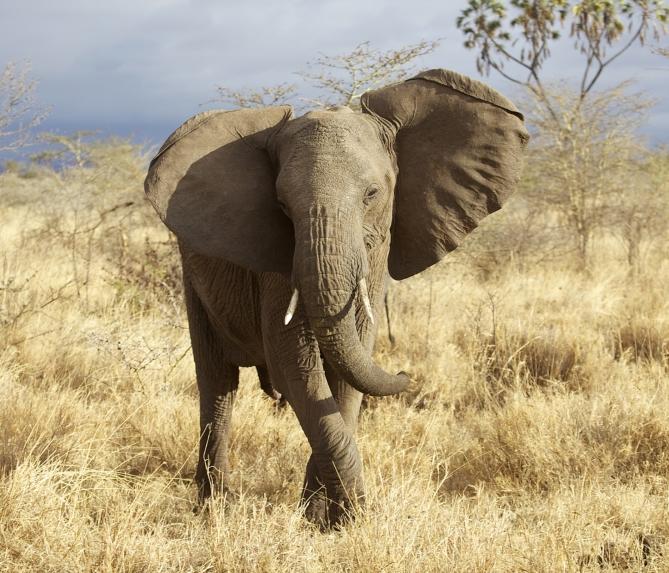 Benin - Reisen - Elefant