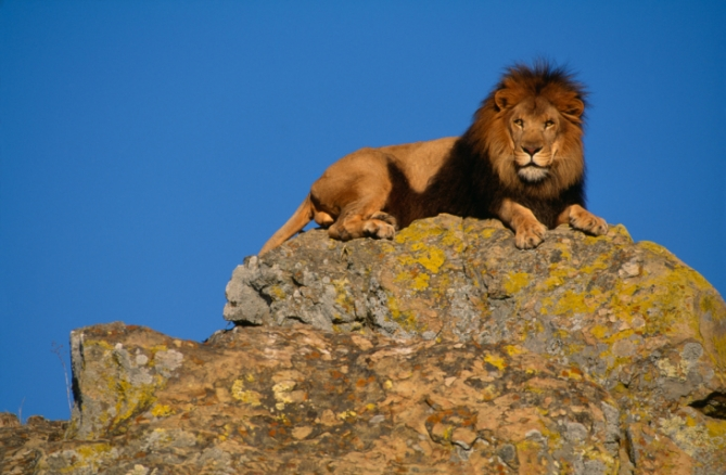 Elfenbeinküste Nationalparks Und Schutzgebiete