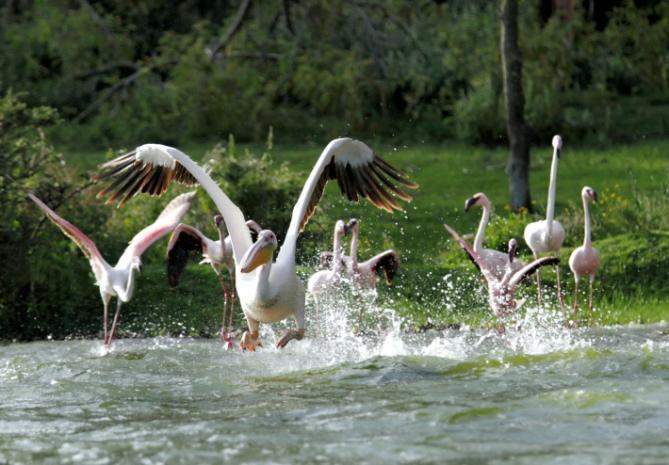 Mauretanien - Reisen - Pelikane