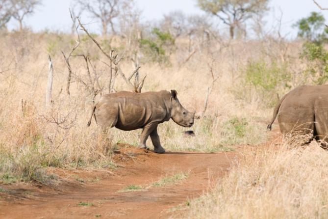 Swasiland - Reisen - Nashorn