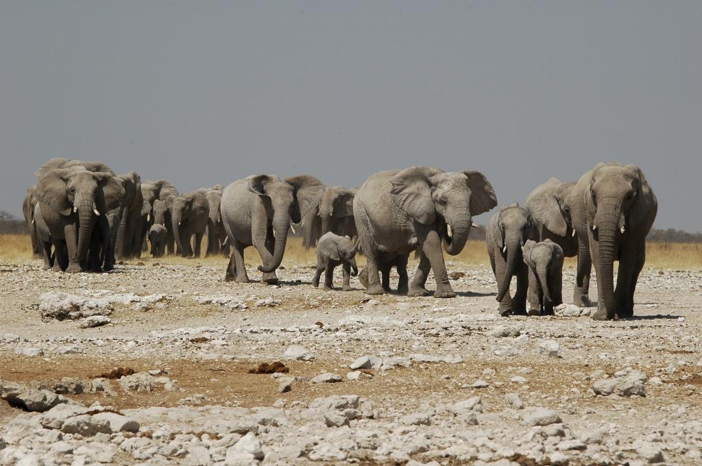 Namibia - Safari - Etosha Nationalpark