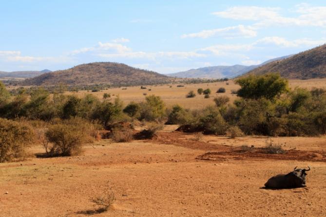 Südafrika - Reisen - Pilanesberg Nationalpark