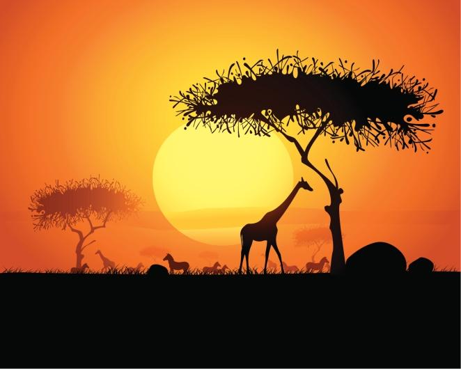 Giraffe - Zebras - Sonnenuntergang - Südafrika