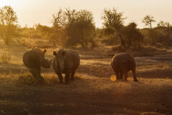 Nashörner - Südafrika - Reisen