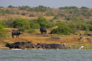 Uganda - Gruppenreisen - Safari