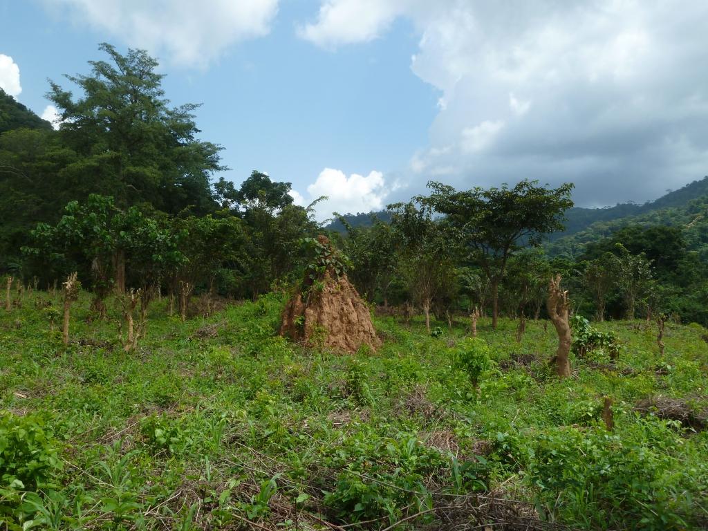 Ghana - Reisen - Landschaft