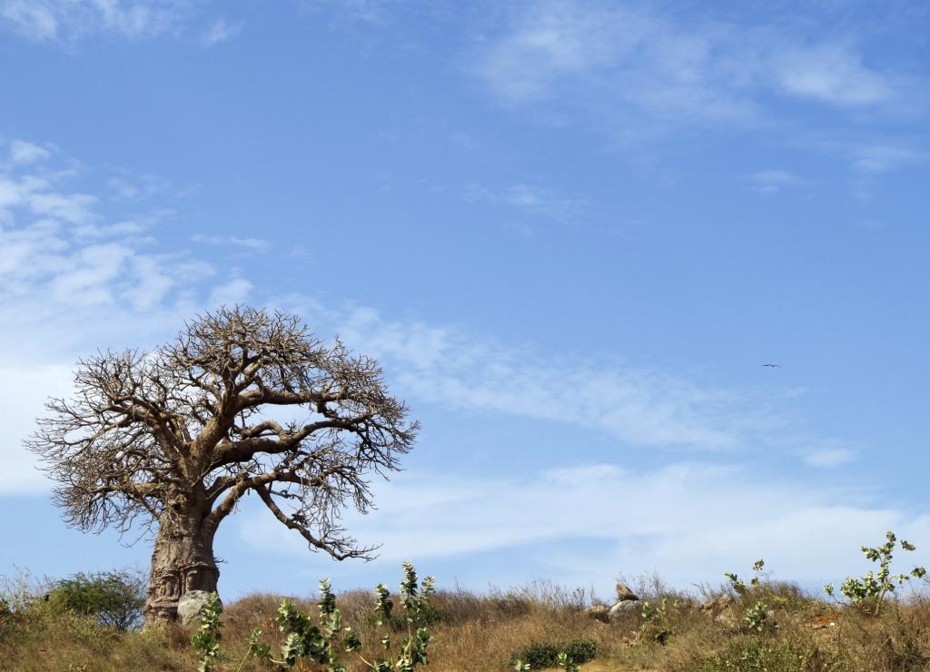 Senegal - Reisen - Baobab Baum