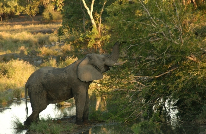Südafrika - Reisen - Nationalparks