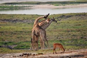Botswana - Reisen - Chobe Nationalpark