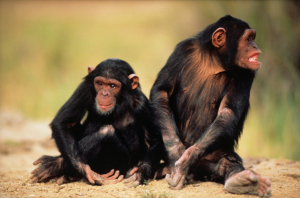 Uganda Gruppenreisen - Nyungwe Forest
