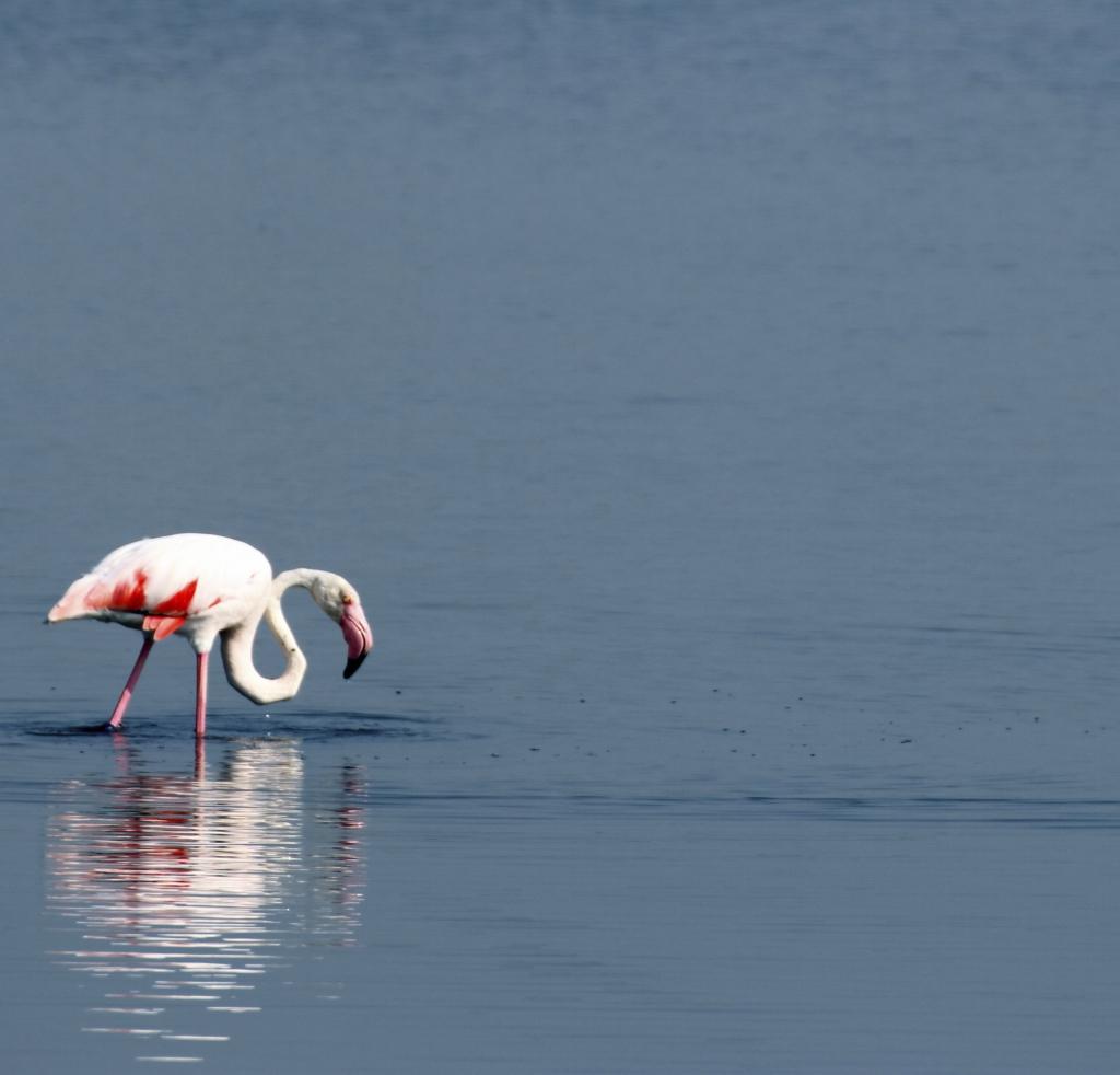 Mauretanien - Reisen - Flamingo