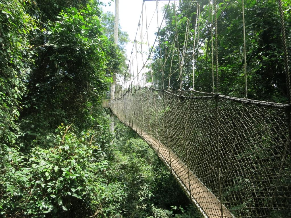 Ghana - Reisen - Kakum Nationalpark