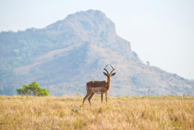 Swasiland - Reisen - Antilope