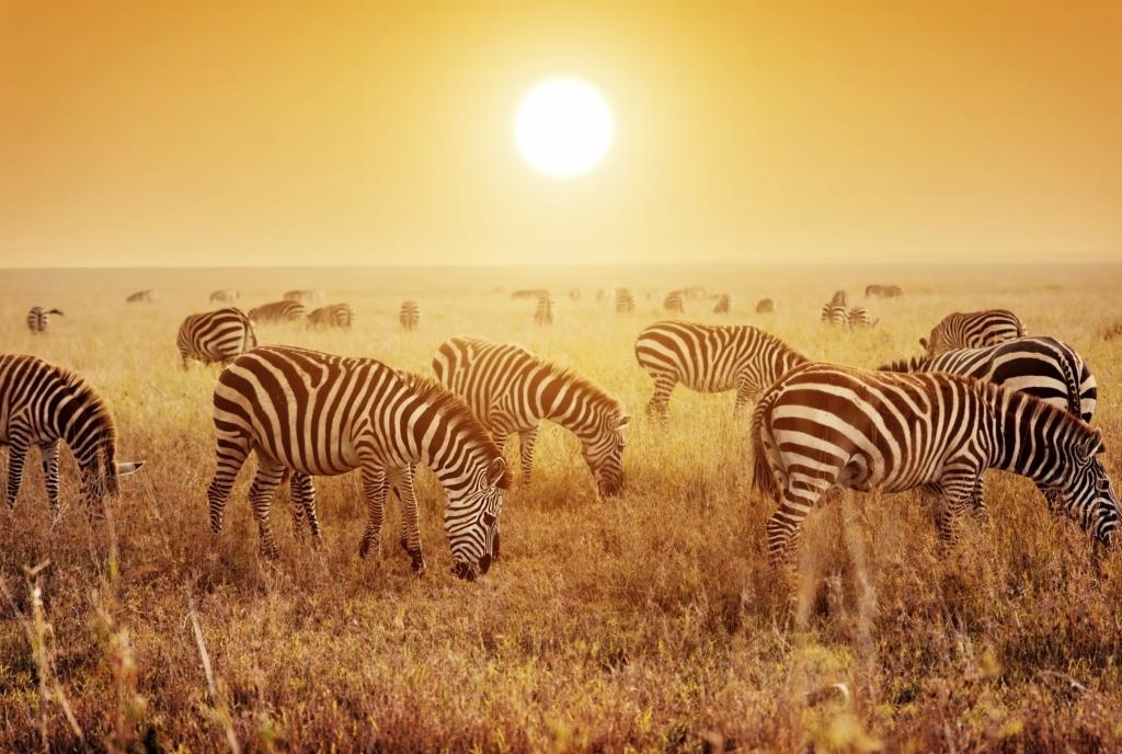 serengeti nationalpark tansania safaris tipps touring afrika. Black Bedroom Furniture Sets. Home Design Ideas