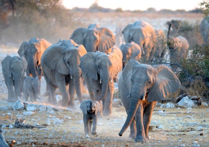 Namibia - Reisen - Elefanten