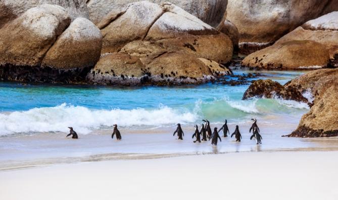 Südafrika - Boulders Beach - Pinguine