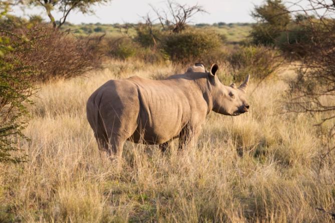 Südafrika - Reisen - Nashorn