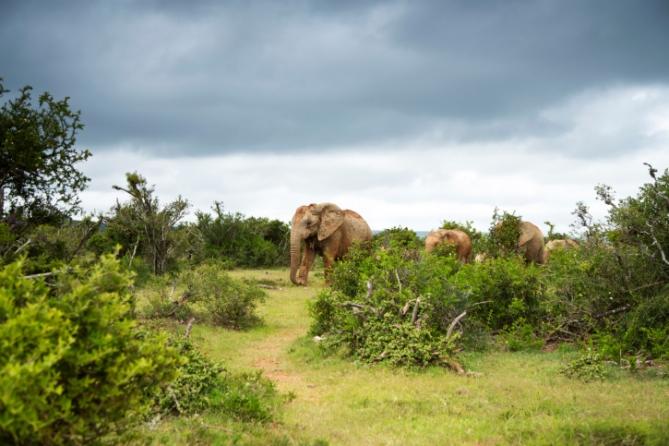 Südafrika - Reisen - Addo Elephant Park