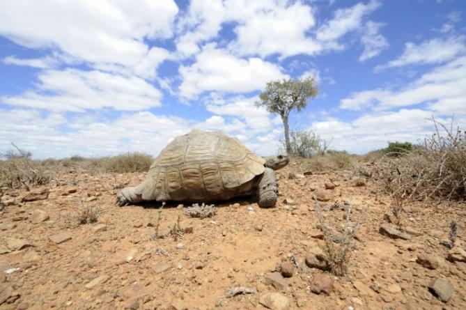 Südafrika - Reisen - Schildkröte